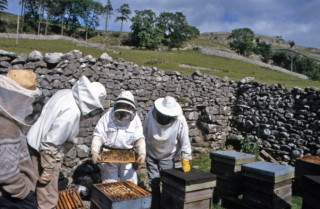 bees up the dale