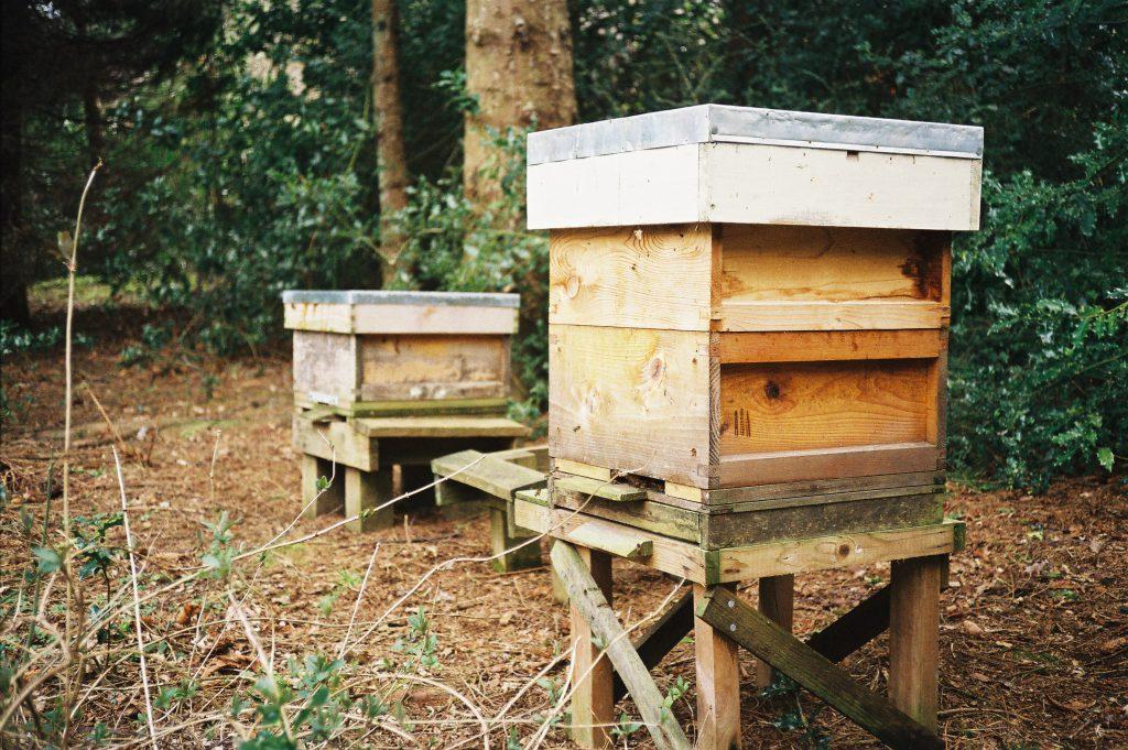 Apiary hives