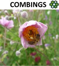 Combings September 2014